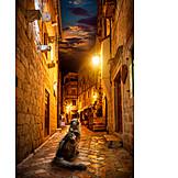 Night, Cat, Alley, Kotor