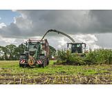 Agriculture, Harvest, Maize