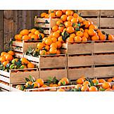 Harvest, Oranges, Storage