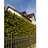 House, Privacy, Hedge