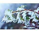 Winter, Frost