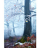 Forest, Winter, Frost