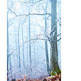 Forest, Winter, Fog
