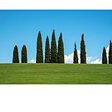 Meadow, Cypress