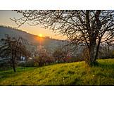 Sunrise, Orchard meadow