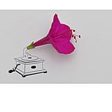 Flower, Gramophone, Funnel