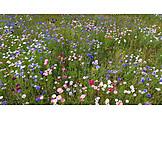 Meadow, Flowers, Flower Meadow