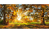 Park, Sunbeams, Autumn